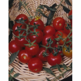 Large Red Cherry Tomato 1/4 lb