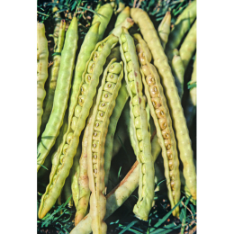 Dimpled Brown Crowder Cowpea