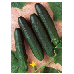 General Lee Cucumber 1/4 oz