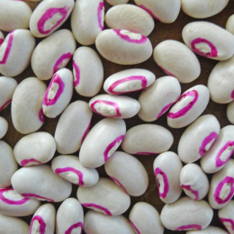 Top Pick Pinkeye Cowpea