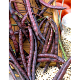 Purple Pinkeye Crowder Cowpea