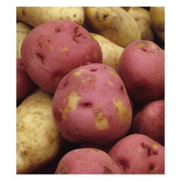 Potato Red Norland 1 lb