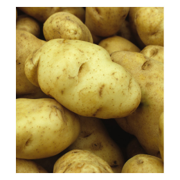 Potato Kennebec 1 lb