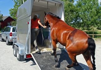 Loading a horse into a trailer
