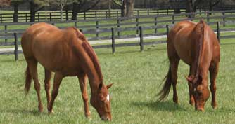 Two horses grazing in the spring