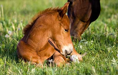 Weaning a foal is a challenging time.