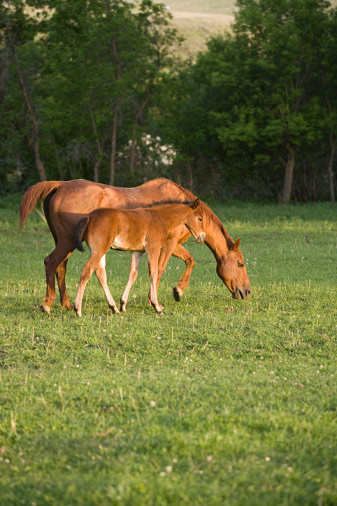 Mother and foal after weaning