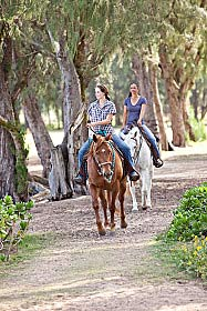 Two horses and riders on a trail ride