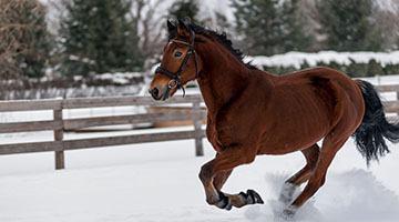 horse-winter-fitness
