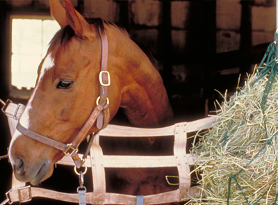 Causes of ulcers in the horse