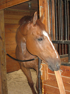 Effective fly control measures can help to keep your horse comfortable all summer.