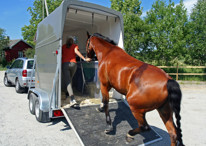 A woman loads a horse into a trailer