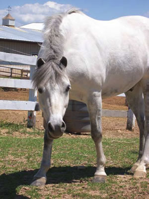 Dry lots are recommended for insulin resistant horses