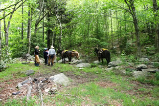 A group of horses and their riders on a woodland trail