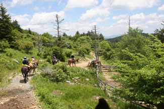 Horses and riders along a trail
