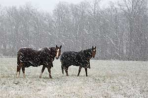 Horses in snow with blankets.