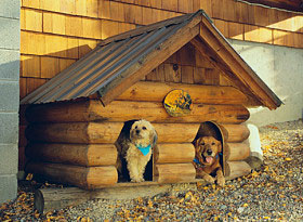 Two dogs staying warm in the winter