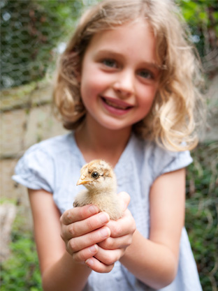 A young girl with her chicken