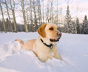 Protect your pets from winter's cold temperatures.