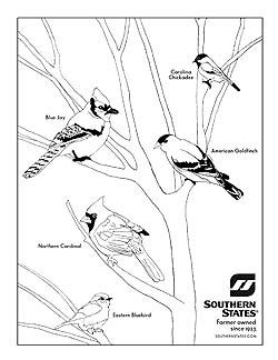 How to Teach Your Kids About Wild Birds  Southern States Cooperative