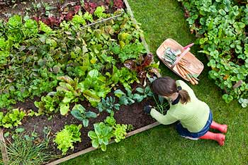 A woman tends a front yard vegetable garden